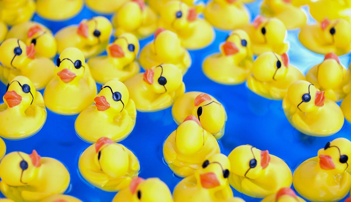 web_ducks-1